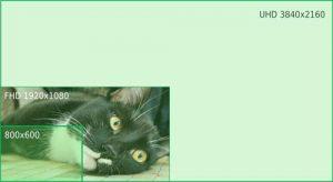 foto gatto bianco e nero sdraiato